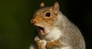 squirrelshock